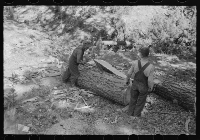 Rolling over log at tie-cutting camp, Pie Town, New Mexico