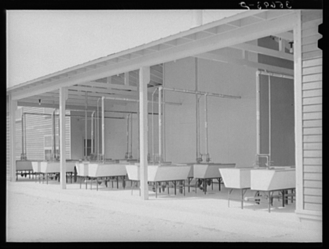 Rows of laundry tubs at the migratory labor camp at Sinton, Texas