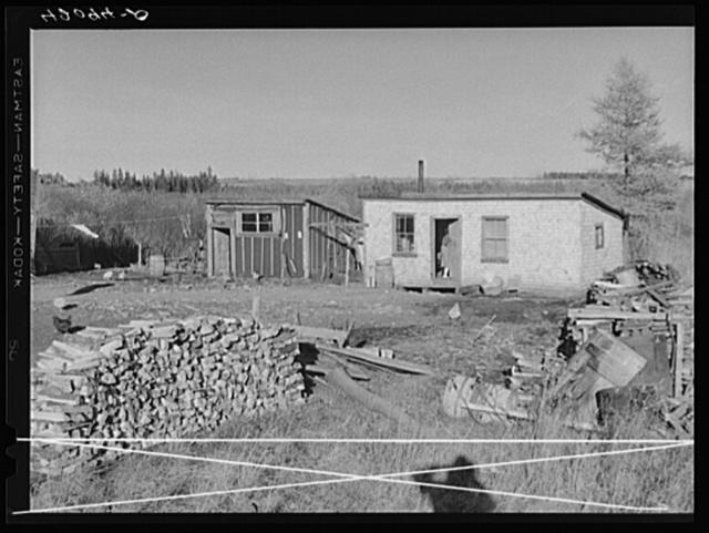 Rural slums near Van Buren, Maine, showing firewood gathered for winter