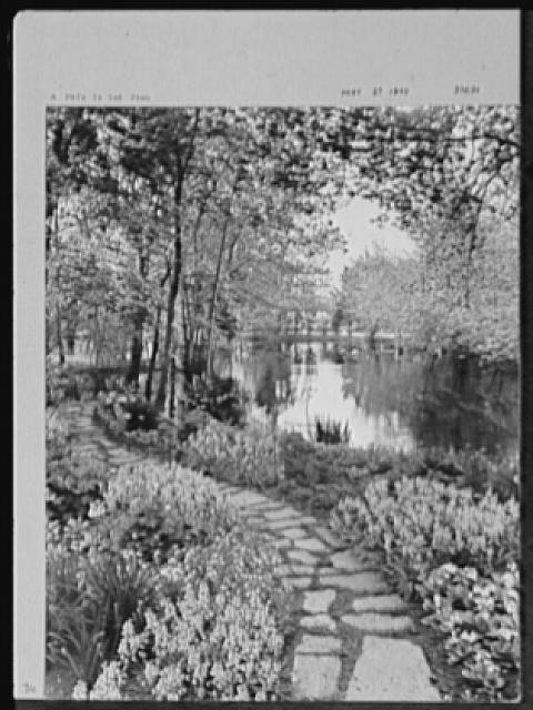 Seventy-one years, or, My life with photography. Path to the pond, May 27, 1940