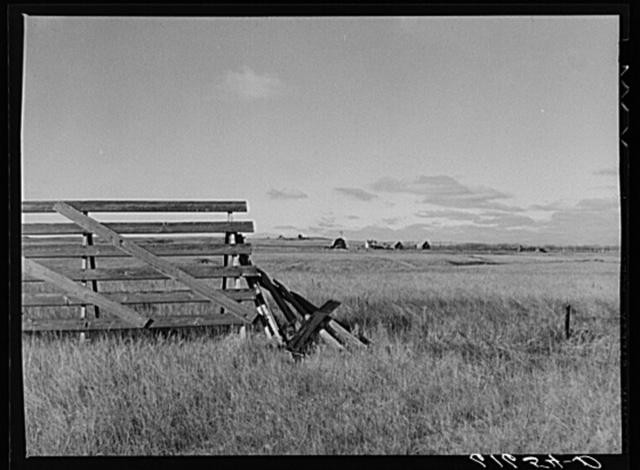 Snow fence and farm. Ward County, North Dakota