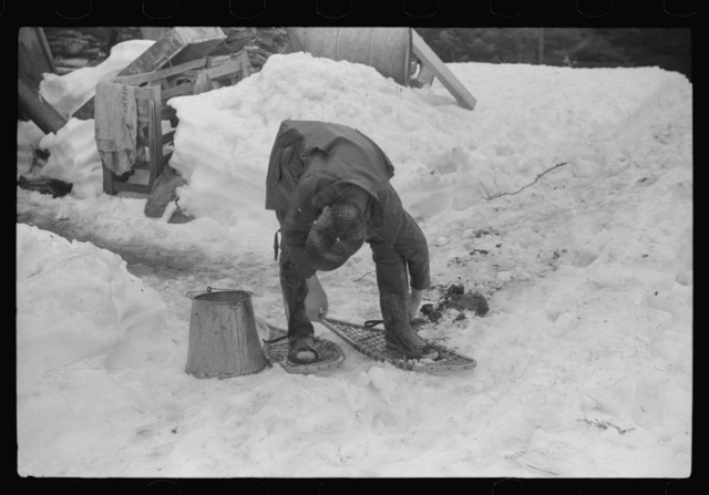 Son of Walter Gaylord putting on snowshoes before going to gather sap from sugar maple trees. The snow was so deep that snowshoes were necessary to get around on. Mad River Valley, Waitsfield, Vermont. He averages about 150 gallons of syrup annually, this year tapped only 600 out of his 1000 trees, because of unusually deep snow and late spring. He owns several farms; in this particular farm unit there are eighty acres.It has been in family three generations. Has about thirty-five or forty head of cattle, raises poultry and potatoes