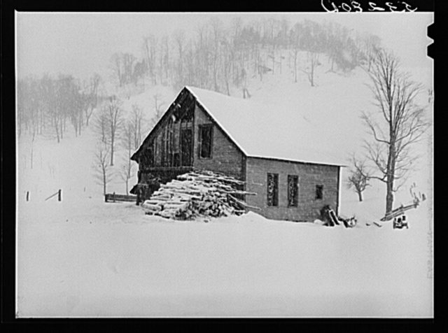 Taking wood from snowed-under woodpile into shed with team of oxen and sled. Near Barnard, Windsor County, Vermont