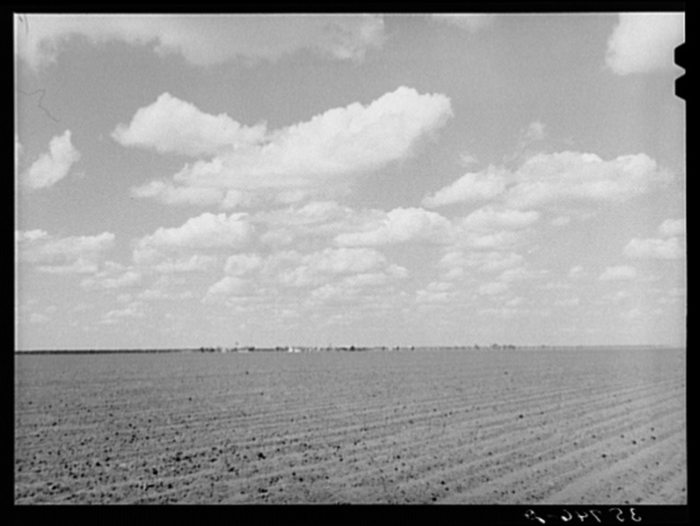 The land is flat, black, rich and intensively cultivated in the coastal plains of Texas. San Patricio County, Texas