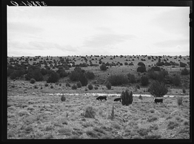 The rangeland. Concho, Arizona