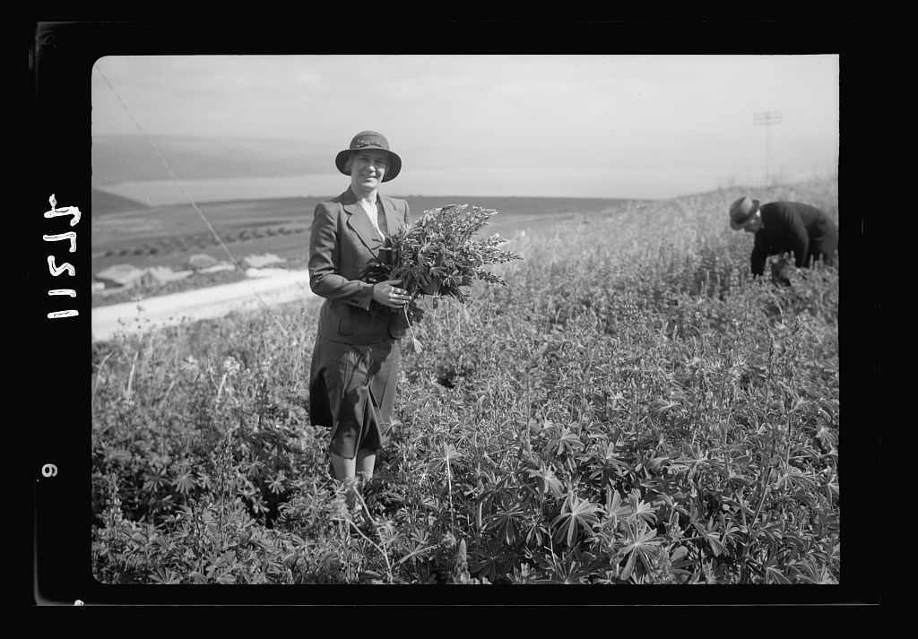 The Scots Mission Hospital, Tiberias. Mrs. Torrance in field of lupines, Dr. in distance
