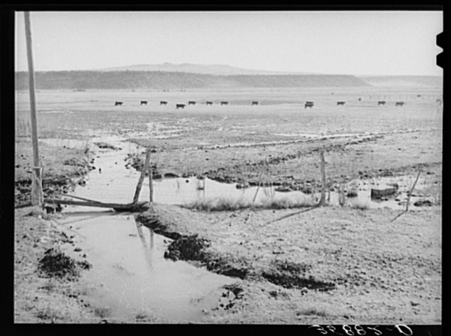 The start of flood irrigation on the hay fields in the valley of the Little Colorado River Valley. After these fields are so irrigated the cattle are driven to the mountains for summer pasturage while the hay grows and matures. Apache County near Springerville, Arizona