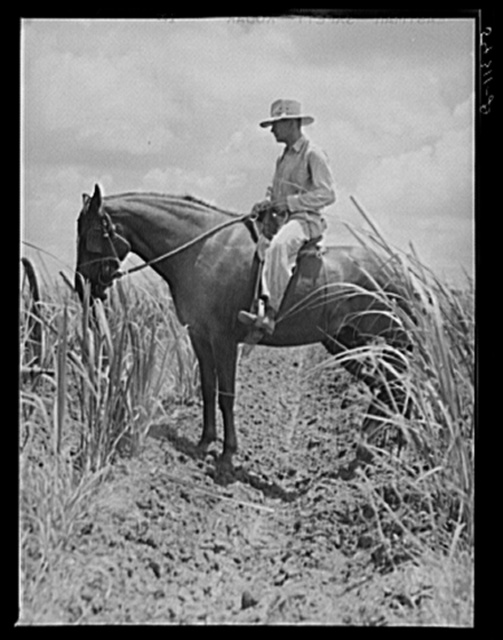 The work foreman, chosen by members of the cooperative from among their own group, supervising the cultivation of the sugarcane. Terrebonne Project, Schriever, Louisiana