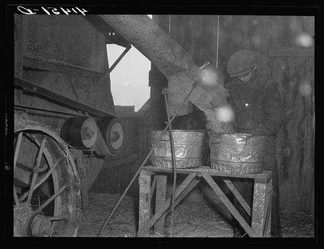 Threshing in the barn of Mr. Alfred Shaffner. A farmer in the submarginal farm area of Sugar Hill, near Townsend , New York