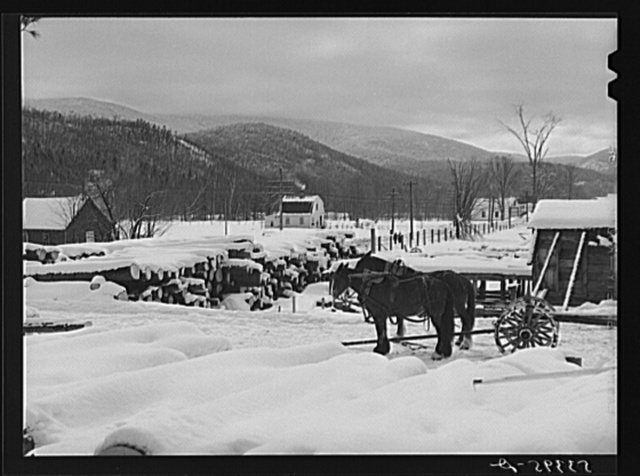 Timber leveled by the 1938 hurricane piled at a saw mill just outside of Warren, New Hampshire