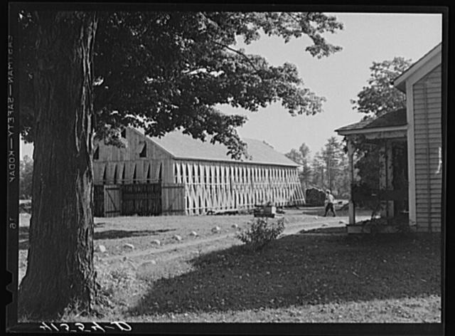 Tobacco barn on the farm of Mrs. Mary Smith, Polish-American tobacco farmer. Near Thompsonville, Connecticut