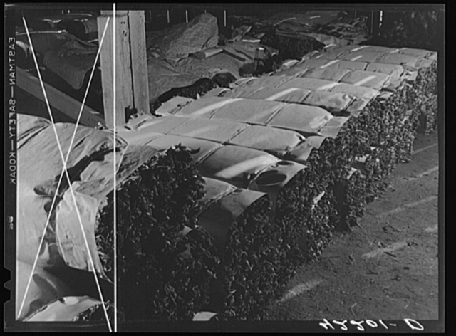 Tobacco wrapped in bundles after stripping operations. Near Windsorville Connecticut