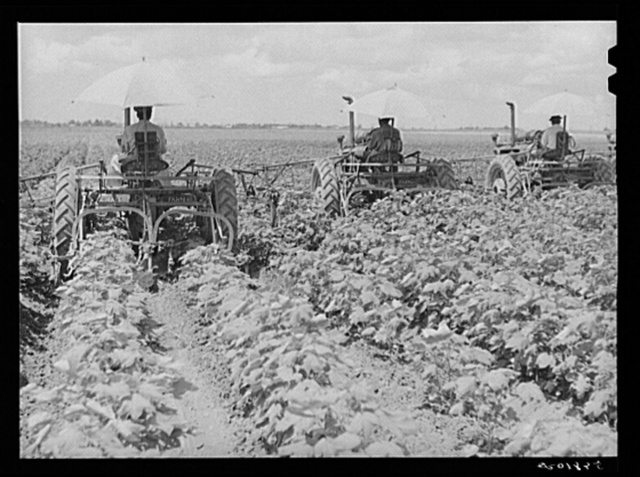 Tractors have taken the place of the mule and the plow on Hopson Plantation where day labor is used almost exclusively, displacing the old tenants on the place. Clarksdale, Mississippi Delta, Mississippi