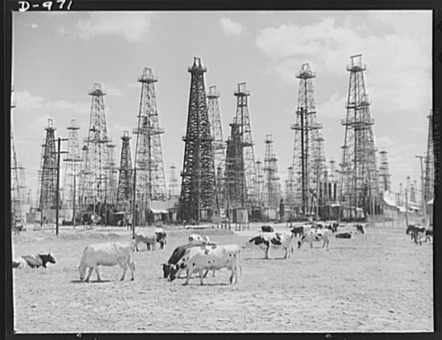 Two valuable resources of the Southwest--rich oil fields and fine grazing land. In this scene near Norwalk, California oil wells rear their imposing structures over a herd of cows on one of the state's dairy farms