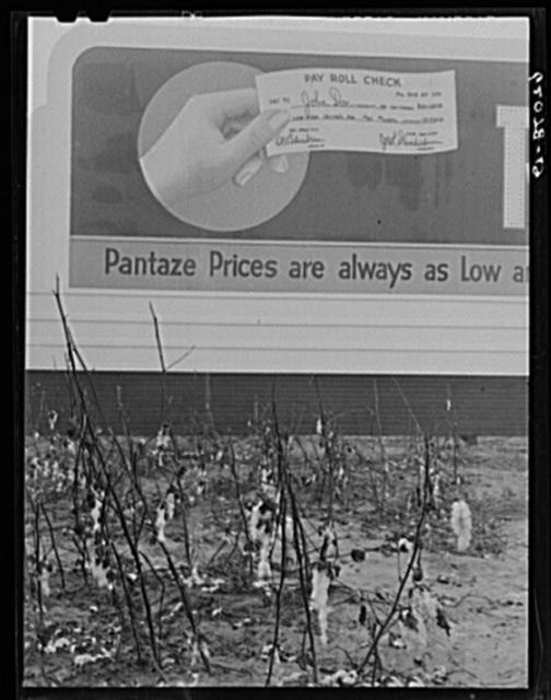 Unpicked cotton lying in field in front of billboard offering to cash powder plant paychecks. Many, who in other years would be picking cotton, are now employed at the powder plant. Millington, Tennessee