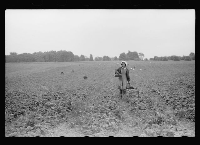 Michigan photographs - Farm Security Administration / Office of War Information Photograph.