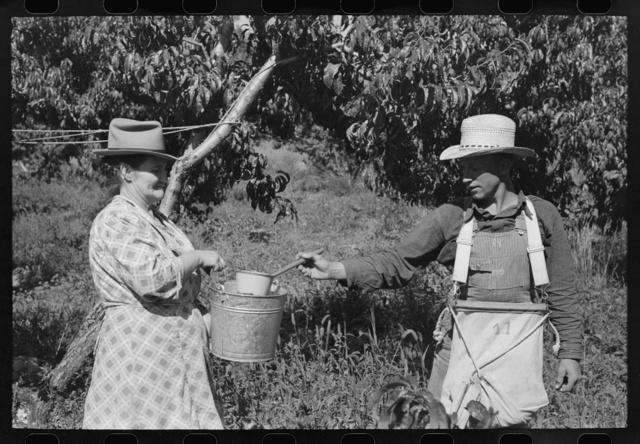 [Untitled photo, possibly related to: Peach pickers with sackful of peaches, Delta County, Colorado. These are local boys]