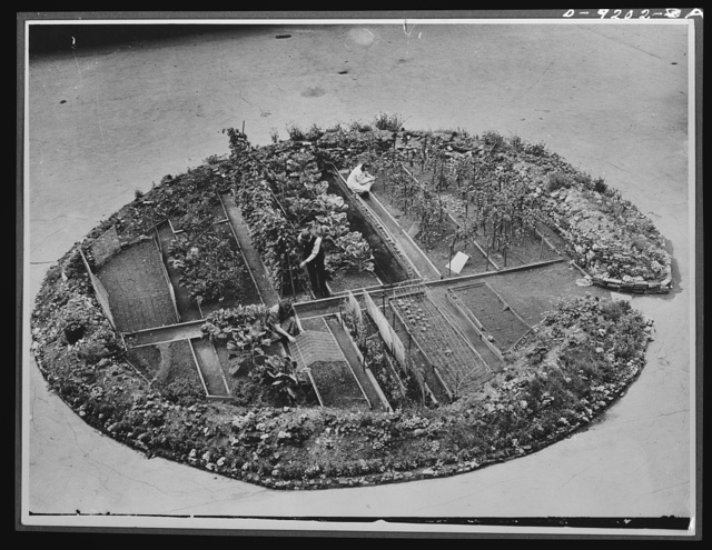 Victory Gardens--for family and country. A thriving Victory Garden--not on an island, but in a London bomb crater, close to Westminster Cathedral. Where the Nazi's sowed death, a Londoner and his wife have sown life-giving vegetables