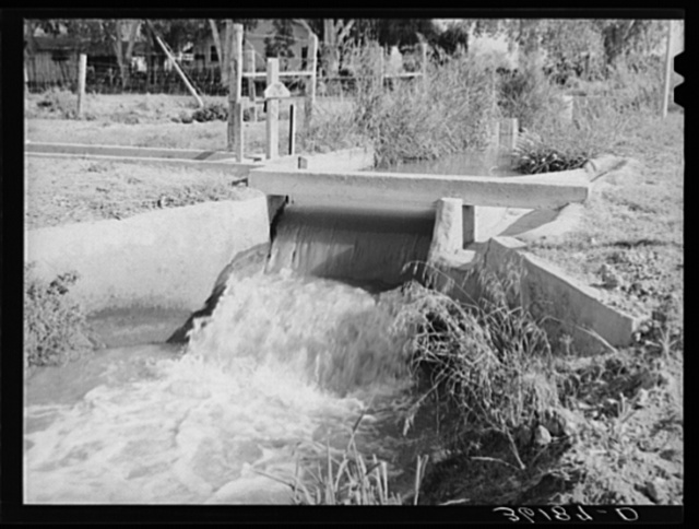 Water in lateral irrigation ditch. Maricopa County, Arizona. Citrus fruit and vegetables are the main crop