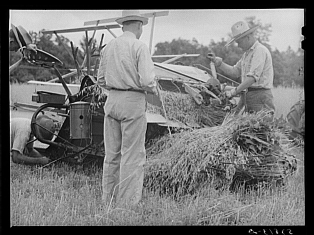 Willy Roberts, county supervisor, inspecting new co-op combine purchased through FSA (Farm Security Administration) to harvest crops of low income farmers and other FSA borrowers. He is demonstrating in his own oat field. Oak Grove, West Carroll Parish, Louisiana