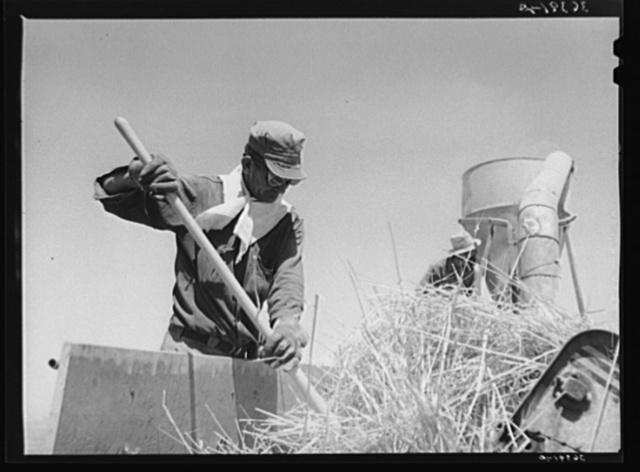 Worker at the hay chopper at the Casa Grande Valley Farms. Pinal County, Arizona