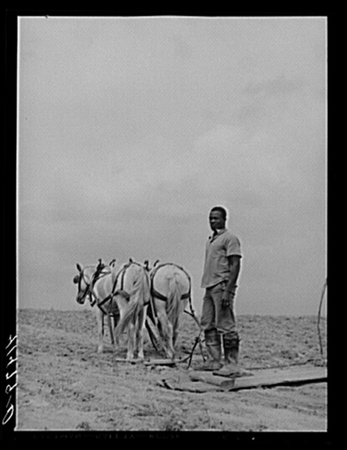 Young Negro farmer working on the field of Mr. Miller's farm. Mr. Miller is the only Negro farmer on Rumsey Hill, submarginal farm area near Erin, New York