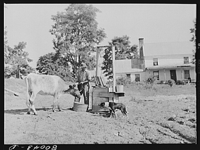 A dug well improperly located and constructed; surface water washing from barn lot will carry filth into well. Safe well demonstration near La Plata, Maryland, Charles County