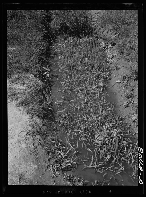 A fouled ditch; mosquitoes breed in such spots, mosquitoes transmit malaria. Near La Plata, Maryland, Charles County