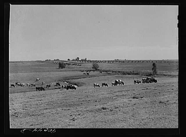 A Witwer dairy and cattle farm. Mr. Witwer also owns a chain of grocery stores. Near Cedar Rapids, Iowa