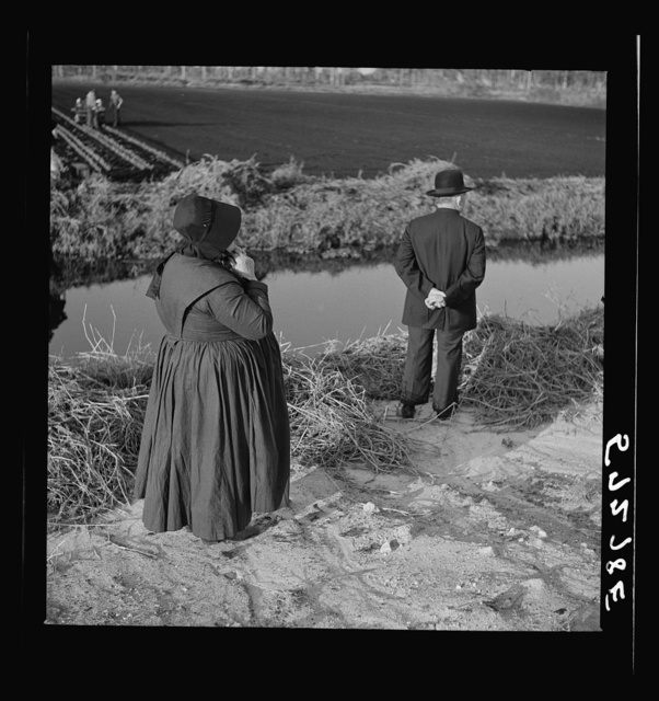 Amish farm couple from Pennsylvania observing farming methods near Sarasota, Florida