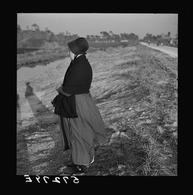 Amish farm woman from Pennsylvania near Sarasota, Florida, observing Florida farming methods
