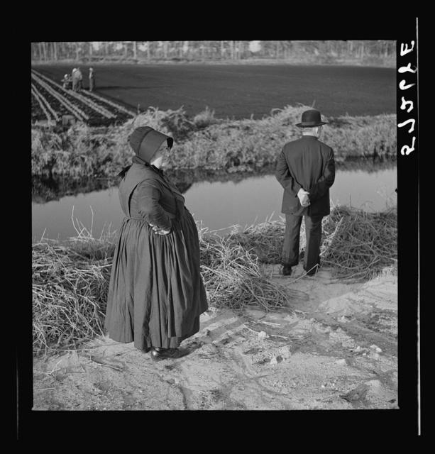 Amish farmers from Pennsylvania observing farming methods near Sarasota, Florida