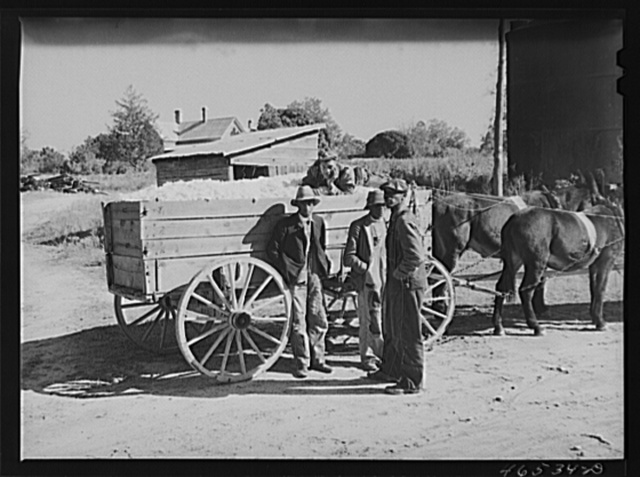 At the cotton gin in Siloam on ginning day, Greene County, Georgia