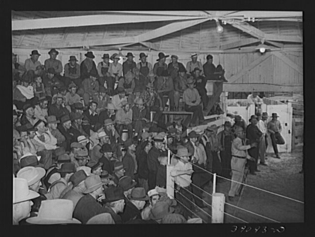 Auction of livestock. Ontario, Oregon
