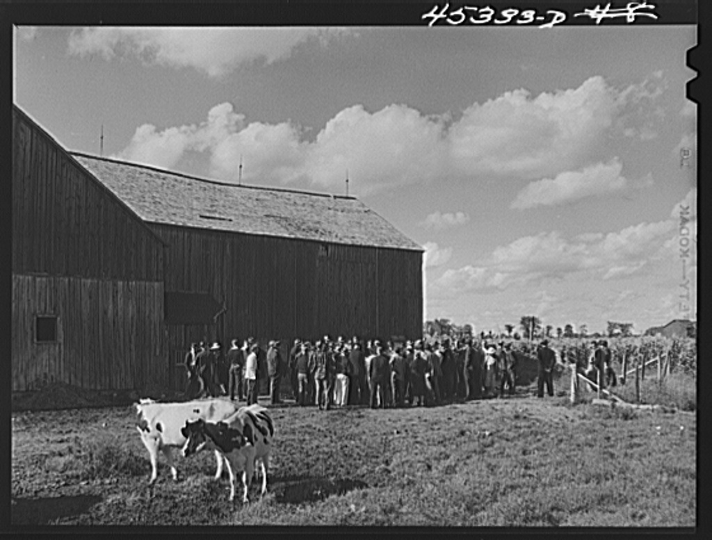 Auctioning off a dairy herd on the Ingalls farm in the Pine Camp expansion area. Near Antwerp, New York