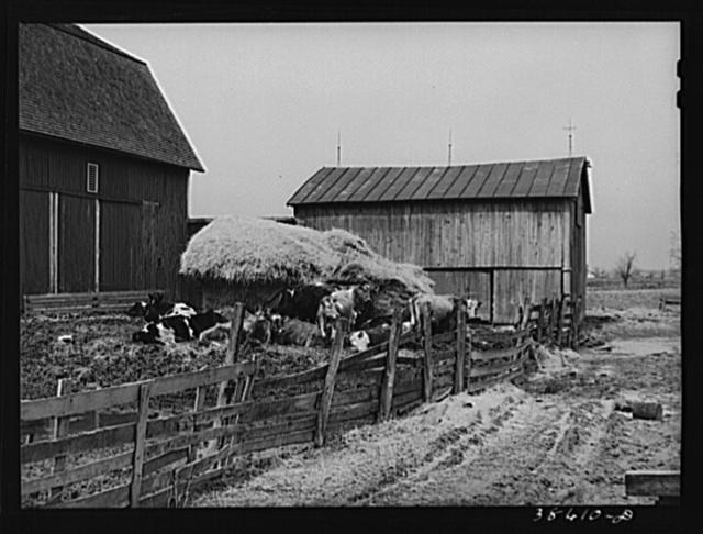 Barnyard scene. Hancock County, Ohio
