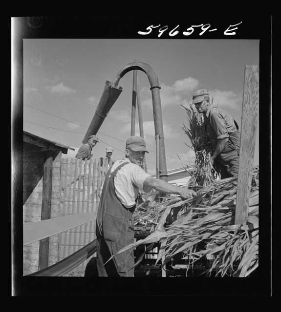 Co-op members filling a home-made silo with corn. Two Rivers Non-Stock Cooperative Company. Waterloo, Nebraska