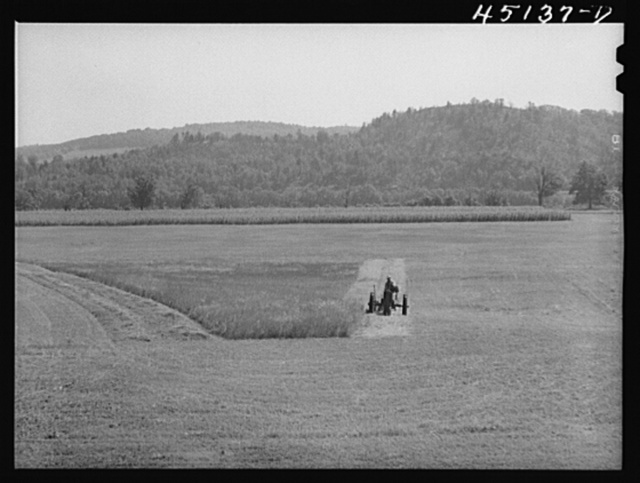 Cutting hay on a flat farm in the Connecticut River valley near Bellows Falls, Vermont