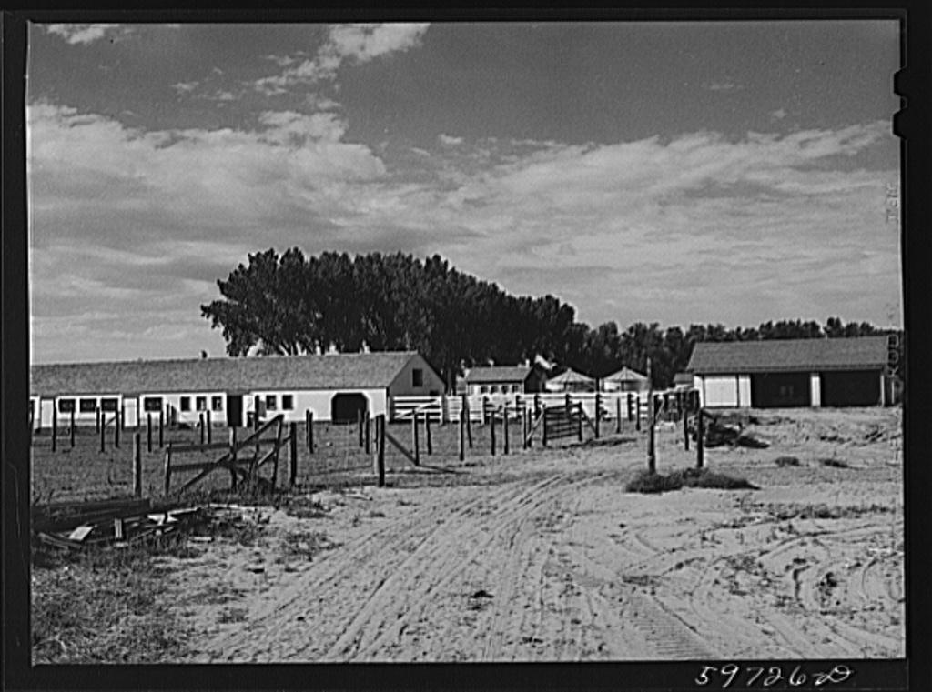 Dairy barn. Cooperative enterprise, at Scottsbluff Homesteads, FSA (Farm Security Administration) project. Scottsbluff, Nebraska