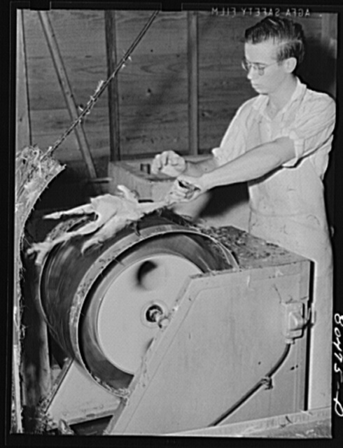 Electric plucker in action. Enterprise FSA (Farm Security Administration) canning station, Coffee County, Alabama