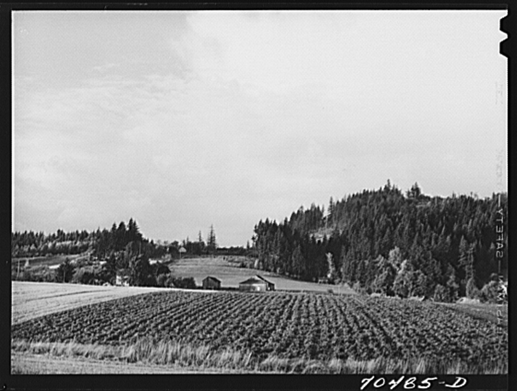 Fall gardens and orchards. Willamette Valley, Clackamas County, Oregon. This section produces truck for Portland area and some out-of-state export