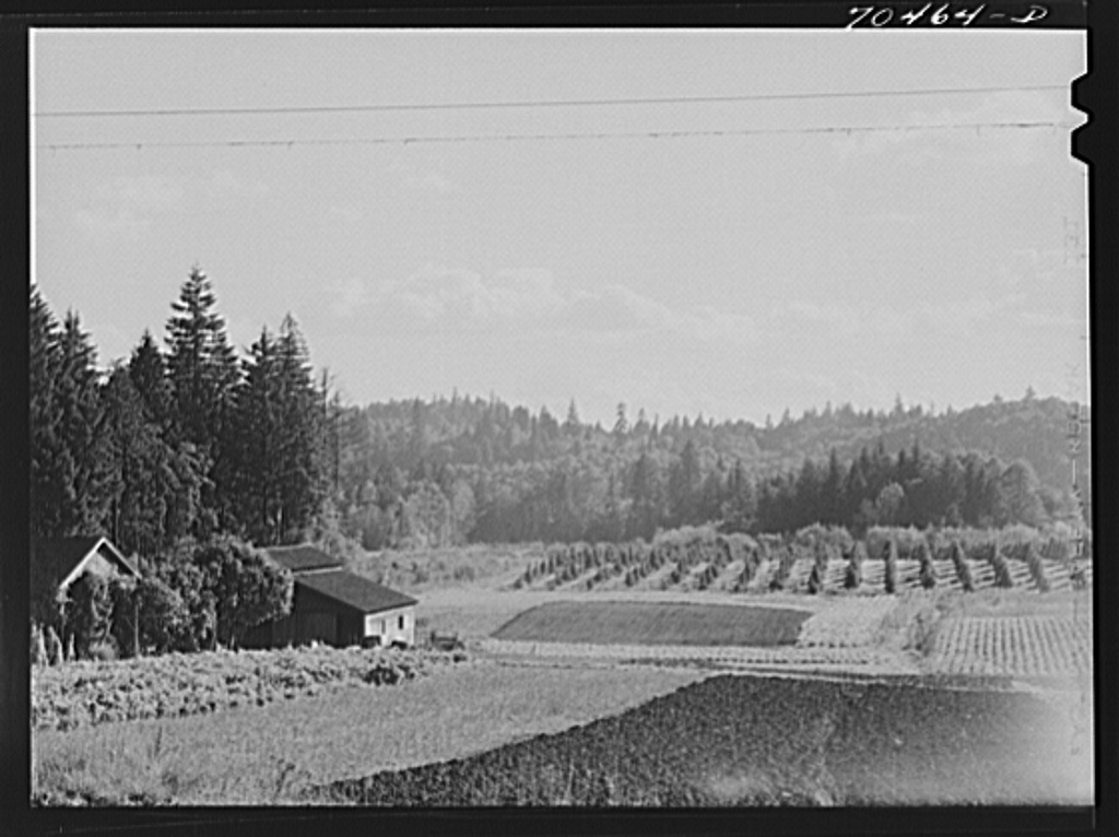 Fall gardens and orchards. Willamette Valley, Clackamas County, Oregon. This section produces truck for the Portland area and some out of state export