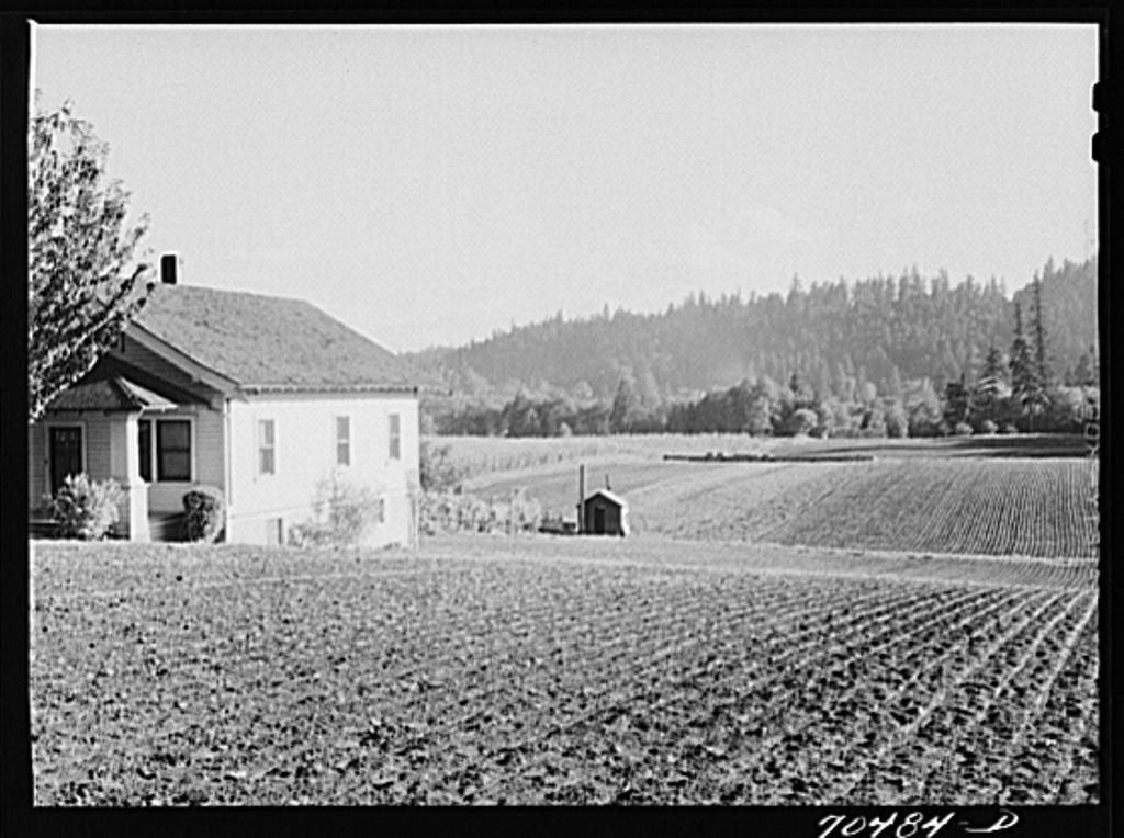 Fall spinach. Willamette Valley, Clackamas County, Oregon