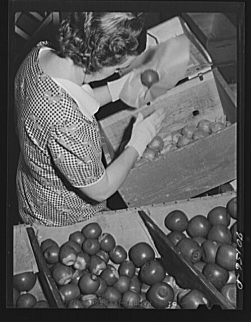 Farm woman who lives at the FSA (Farm Security Administration) farm family migratory labor camp, Yakima, Washington, packing wooden apples at the WPA (Work Projects Administration) apple packing school at the camp