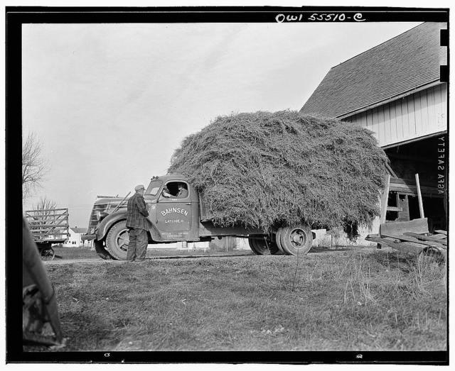 Farmer takes his hay to market near Toledo