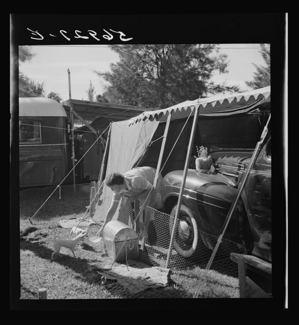 Feeding the puppies. Sarasota trailer park, Sarasota, Florida
