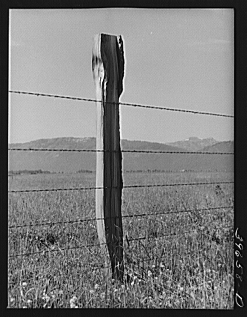 Fence on Cruzen Ranch. Valley County, Idaho. AAA (Agricultural Adjustment Administration) has painted out this fence as being an outstanding type for ranch use. It keeps out predators (wolves, etc.), the wire is stapled loosely to allow for expansion and contraction caused by temperature changes