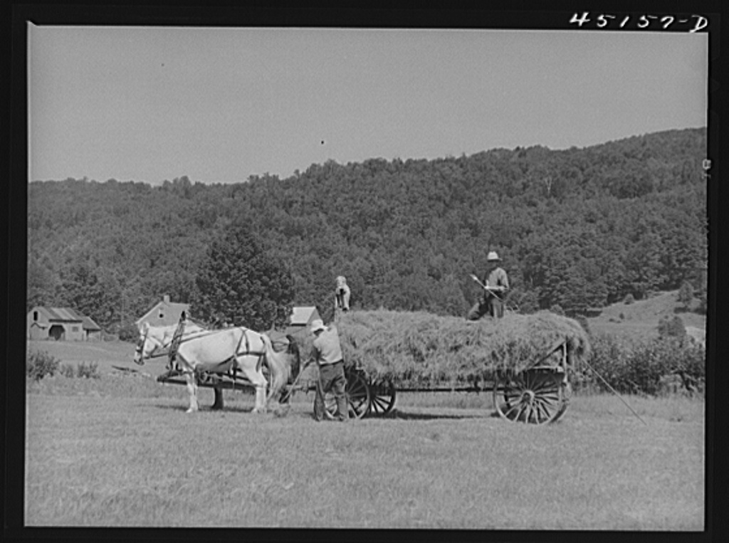 Gathering hay on the farm of Emanuel Rink, FSA (Farm Security Administration) dairy farmer near Brookline, Vermont