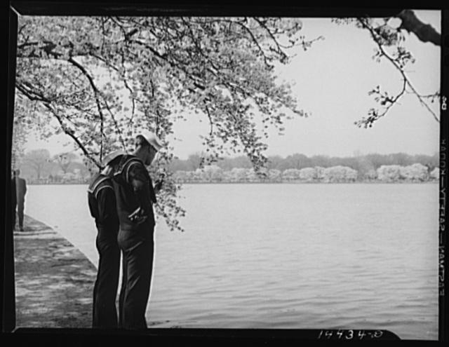 Geeze Mac, these remind me. Cherry Blossom Festival, Washington, D.C.