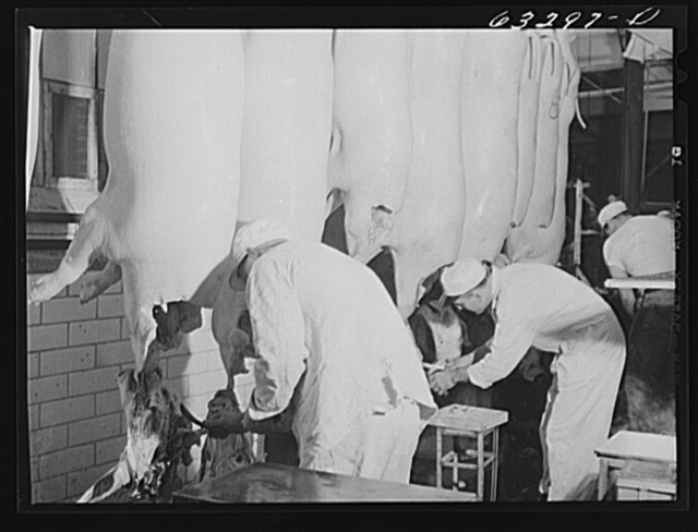 Government inspection of hog carcasses. Packing plant, Austin, Minnesota